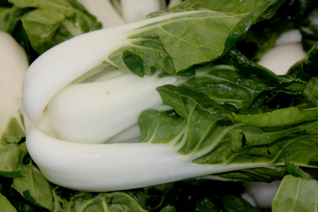 Baby Bok Choy, Brassica rapa subsp chinensis, popular Asian vegetable with white colored stalks with swollen base ACand dark green leaves with crinklu texture, mineral like taste.