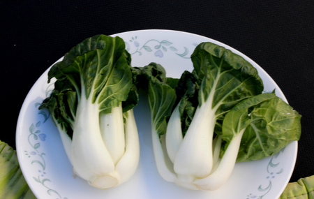 Baby Bok Choy, Brassica rapa subsp chinensis, popular Asian vegetable with white colored stalks with swollen base ACand dark green leaves with crinkly texture, mineral like taste.