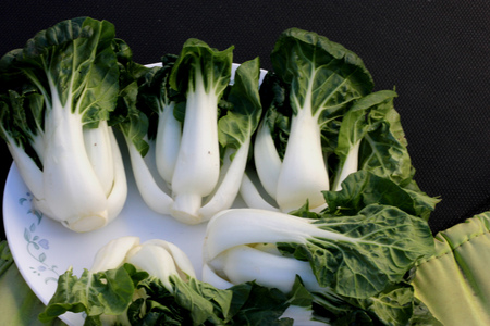 Baby Bok Choy, Brassica rapa subsp chinensis, popular Asian vegetable with white colored stalks with swollen base and dark green leaves with crinkly texture, mineral like taste.