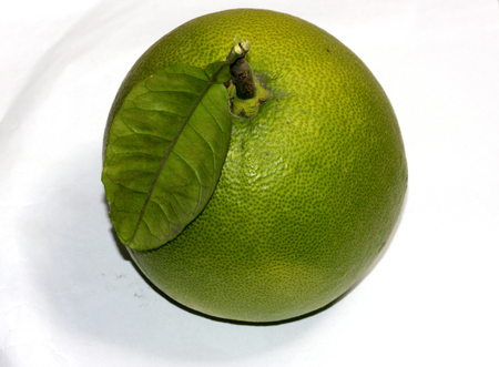 Fruit of  Pomelo or Shaddock, largest citrus fruit, botanically Citrus maxima, with thick white rind and red flesh, leaves have broadly winged petiole nearly 14 as long as blade, fruit is used in many Chinese festive celebrations throughout Southeast Asia.