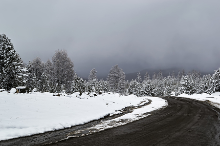 The mountin road in the winter snow-capped forest of Altai.