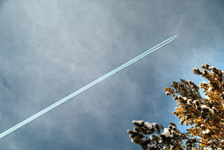 Trace of air plane in blue sky on the background of coniferous tree. Stock Photo