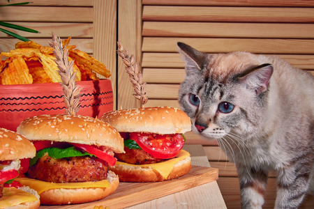 Cat sniffs burgers standing on wooden board in cafe. Cat climbed onto table and sniffed hamburgers with meat, cheese, salad and tomatoes. Rustic stile. Cat with blue eyes.