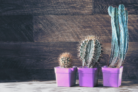 Group cacti on wooden dark background. Pots for plants trendy ultraviolet colors. Rustic stile. Copy space.