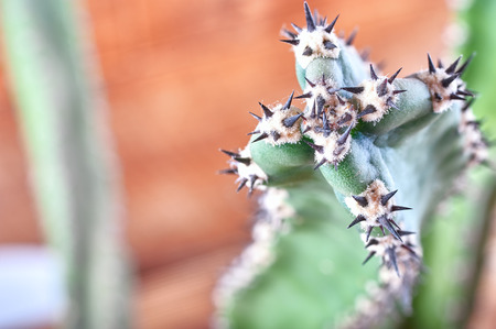 Abstract view of cactus spines. Concept self-defense, unavailability, defense, sustainability, resistance. Copy space.