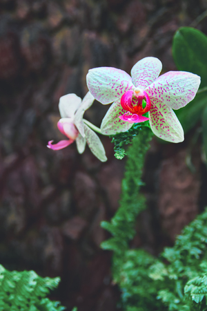 Beautiful Orchid Flowers on dark stone wall background. Bright white with pink speckles flowers. For advertising, poster, calendar, cover. Stock Photo