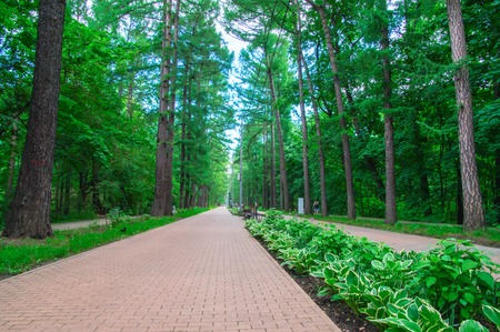 Awesome long walking alley in the summer. Cobbled road (paving slabs) among the dense fairy green forest in the city park. For life design. Road goes to the horizon, perspective.