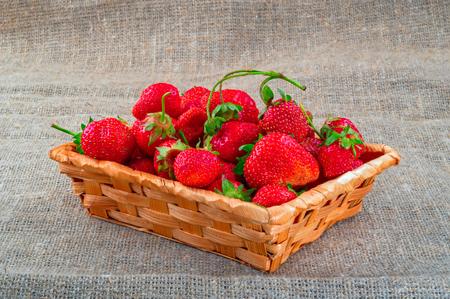 Ripe bright red strawberries fruits. Large juicy strawberries in wicker basket on rustic burlap fabrics background.