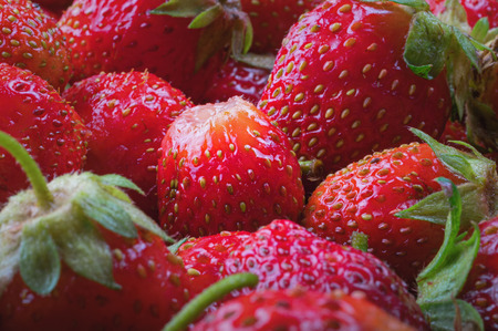 Garden red Strawberries. Natural, juicy, bright Strawberries for concept design. Harvest strawberry. Berry background.
