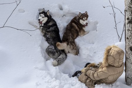 Two dogs lying in the deep snow with a young girl. Top view, Pets with the hostess walking in the winter forest. Stok Fotoğraf