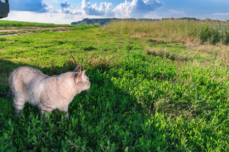 Shorthaired cat on green grass. Portrait cute cat. Sunny day. Copy space.