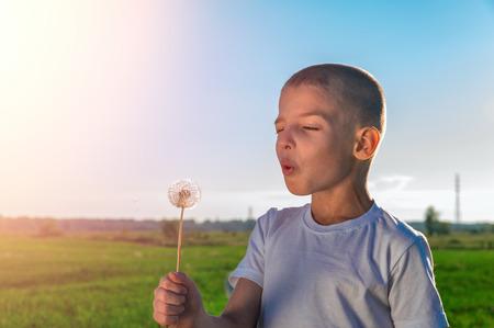 Boy blows on a dandelion. Summer Sunny landscape
