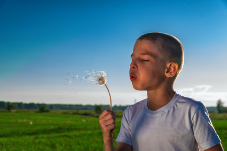 Child is blowing on a dandelion. Boy plays with dandelion on summer walk. Copy space.