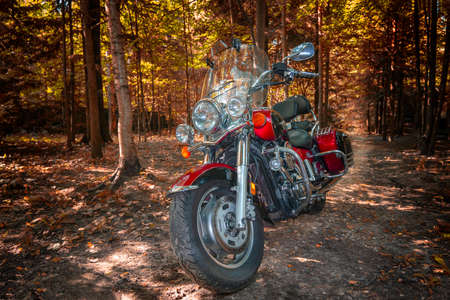 Motorcycle cruiser in sunny autumn forest.