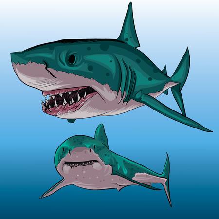 shark cartoon: Dos tiburones bajo el agua, vista delantero agresivo