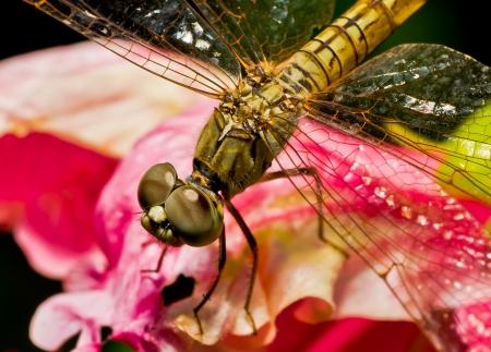 grass close up: Macro dragonfly