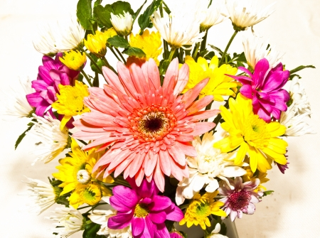 Flower isolated on white background Stock Photo - 13629470
