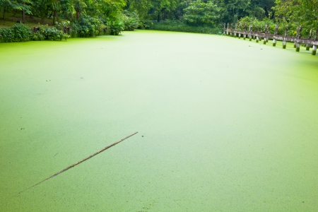 Green pond water photo