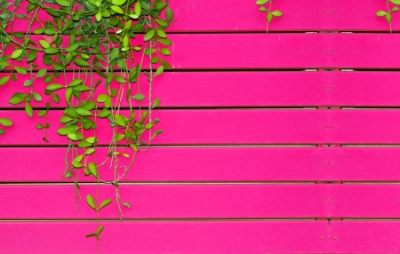 Autumn leaves on the pink wooden wall photo