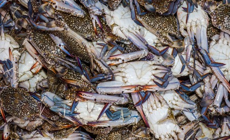 blue swimmer crab: Fresh crab in market