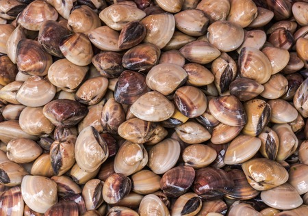 fish vendor: clams