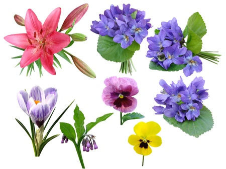 Flowers a collection it is isolated on a white background Stock Photo - 14194277