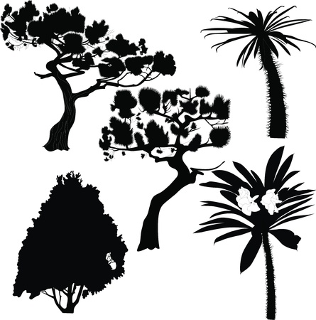 fur-tree birch palm  Vector