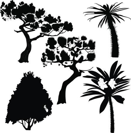 furtree: fur-tree birch palm