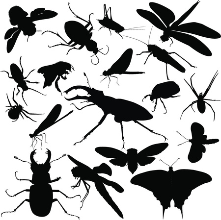 insects animals Vector