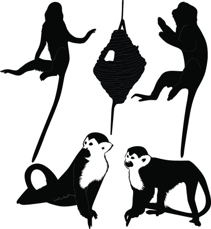 Monkeys animals it is isolated on a white background