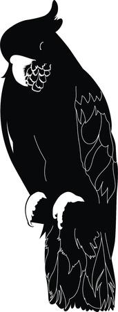 parakeet: Parakeet a cockatoo a bird
