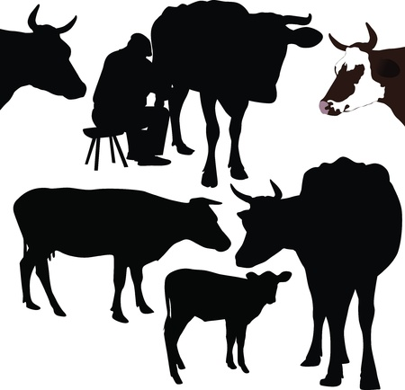 Cow a calf animals it is isolated  Stock Vector - 14194316