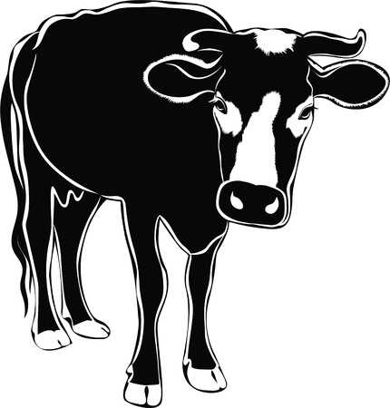 Cow animals it is isolated on a white background  Vector