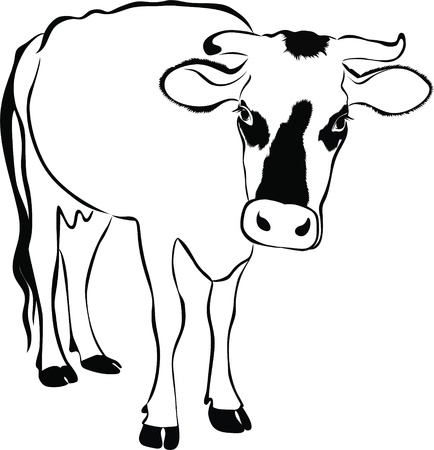 cow silhouette: Cow animals it is isolated on a white background
