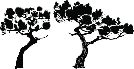 crone: Trees a fur-tree a pine it is isolated  Illustration