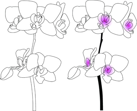 Orchids flowers isolated holiday white background  Vector