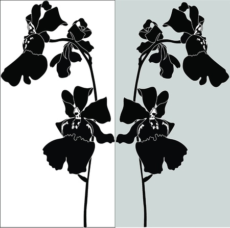 Orchids flowers it is isolated  Stock Vector - 14238084