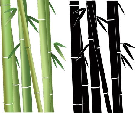 grown: Bamboo have grown plant vector  Illustration