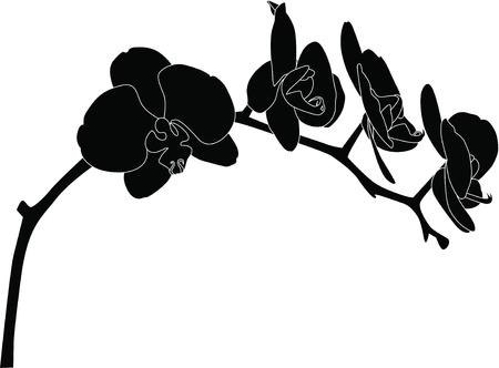 branch to grow up: Orqu�deas flores que se encuentra aislada