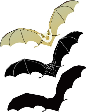 bat weeds on a white background  Illustration