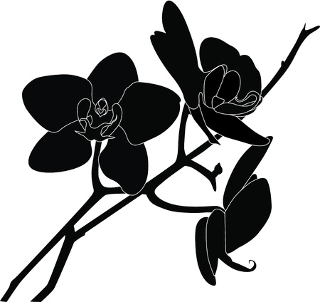 Orchids flowers it is isolated  Illustration