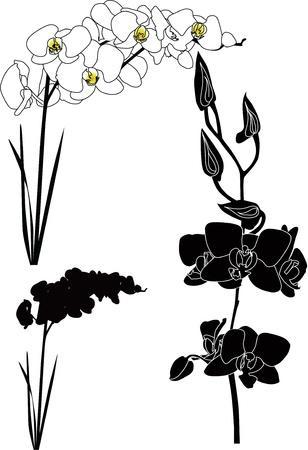 branch to grow up: Orqu�deas flores aisladas Vectores