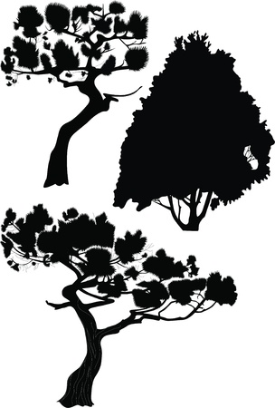 furtree: Fur-tree a fir a pine trees on a white background it is isolated  Illustration