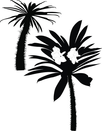 Palm tree cactuses a tree  Vector