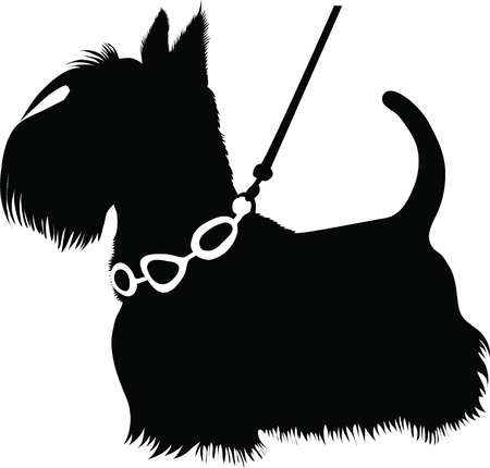 terriers: dogs animal a Scottish Terrier a vector it is isolated on a white background  Illustration