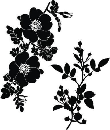silhouette fleur: rose fleurs dogrose il est isolé des vacances Illustration