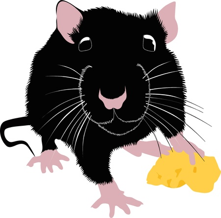 rats mice cheese animals  Vector