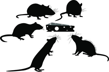 animal silhouette: Rats of the mouse rodents animals cheese
