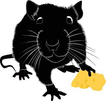 Rats of the mouse rodents animals cheese  Stock Vector - 14322517