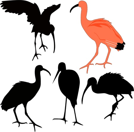 IBIS red birds Vector